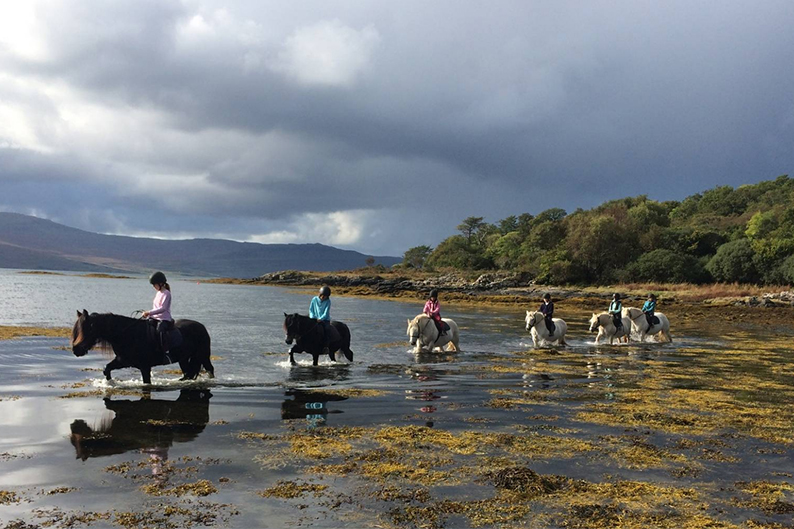 ponies wading through water on Mull