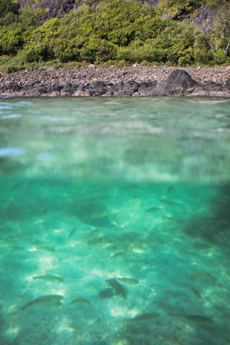 Swimming with the fish in Calgary Bay's blue waters