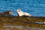 Seal pups lounging on rocks off the island's coast
