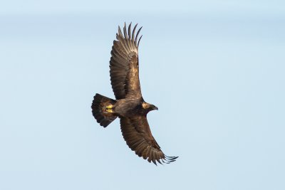 Golden eagles are frequently sighted near the cottage