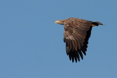 Lots of wildlife to spot, including eagles