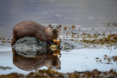 Otter by the shoreline