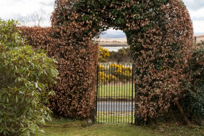 Hedge archway in The Smiddy garden
