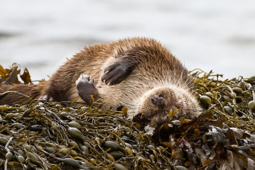 Watch out for otters around the coastline